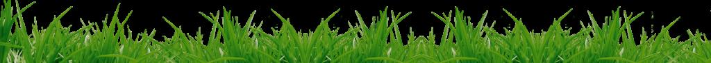 grass_PNG10860